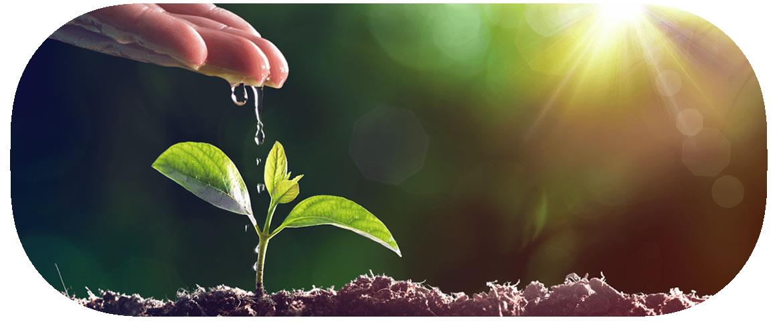 作物に水を供給します